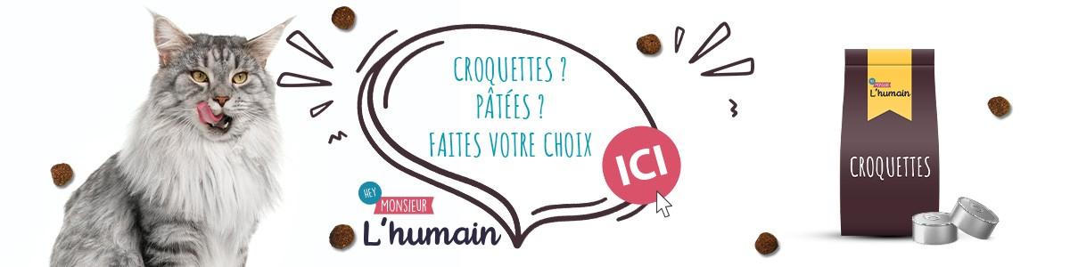Alimentation Chat Patée et croquette